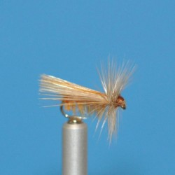 CEC 08 - Tricóptero canela