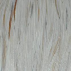 Cuello de gallo Metz